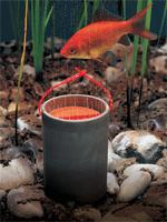 Gartenteich braun for Algenfresser gartenteich fische